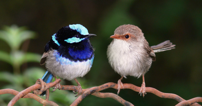 Sexual Dimorphism: What It Is, Research and Data