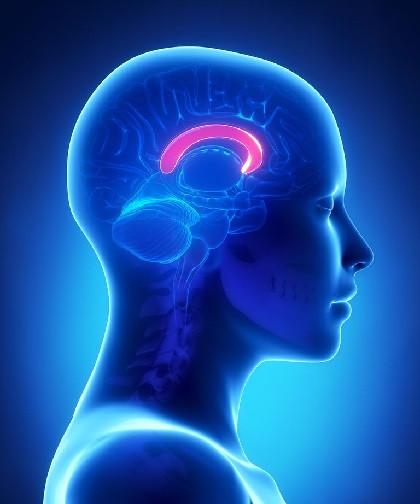 Corpus callosum of the human brain