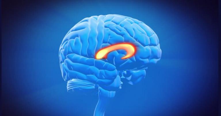 Brain corpus callosum: anatomy, functions and parts