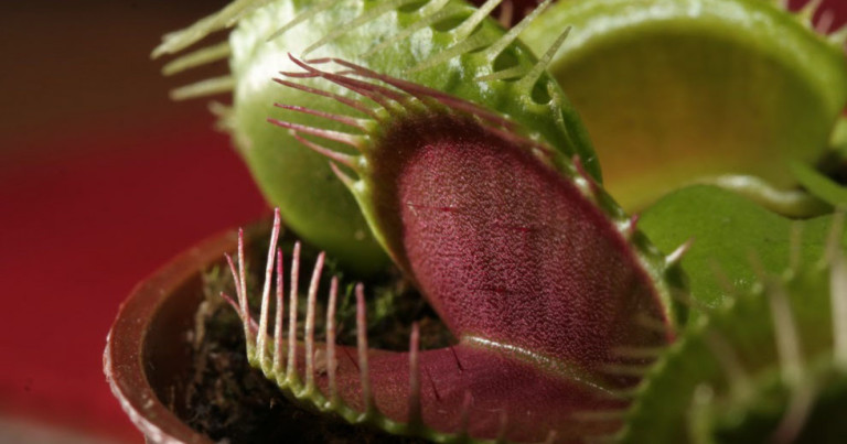 The 9 types of carnivorous plants (photos and characteristics)