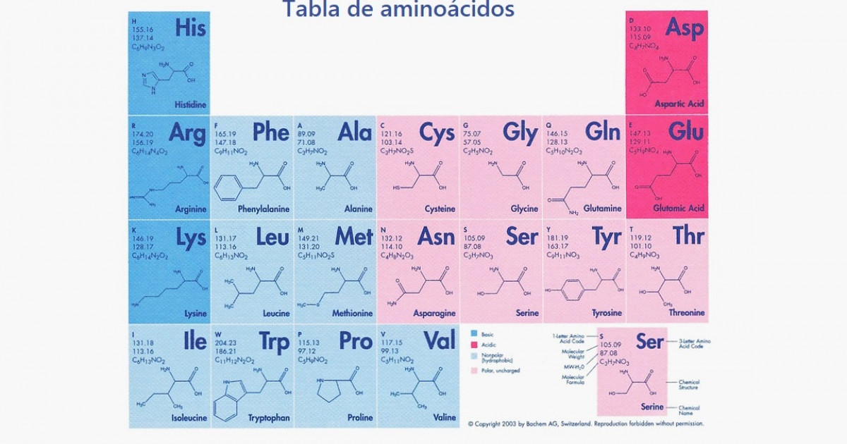 Table of 20 amino acids: types, functions and characteristics