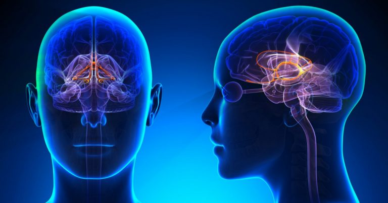 Limbic system: definition, anatomy, structures and functions