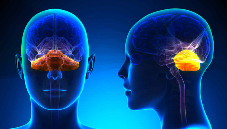 The Diencephalon: Structure and Function of this Brain Region