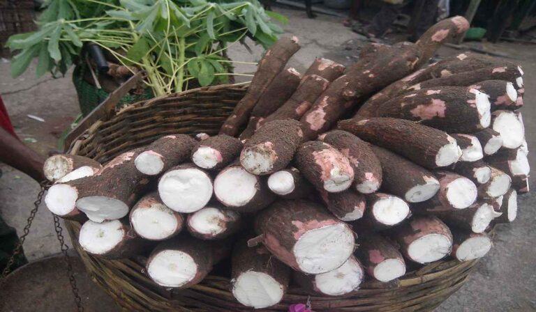 Cassava: main benefits and properties