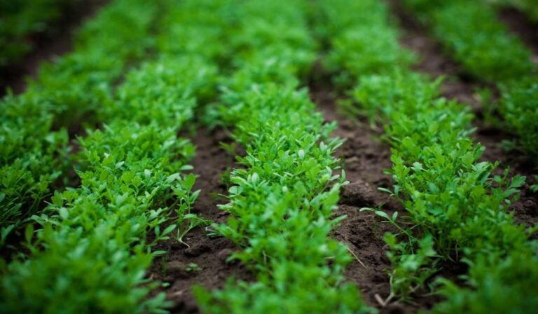 How many calories do watercress provide and is it fattening?
